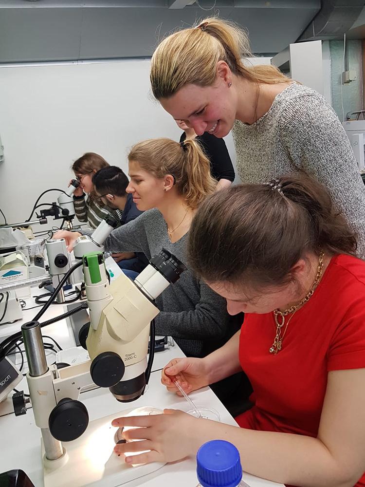 RWB Essen - Ein Tag im Labor des Uniklinikums Aachen - Sortieren der Froscheizellen und Injizieren der RNA
