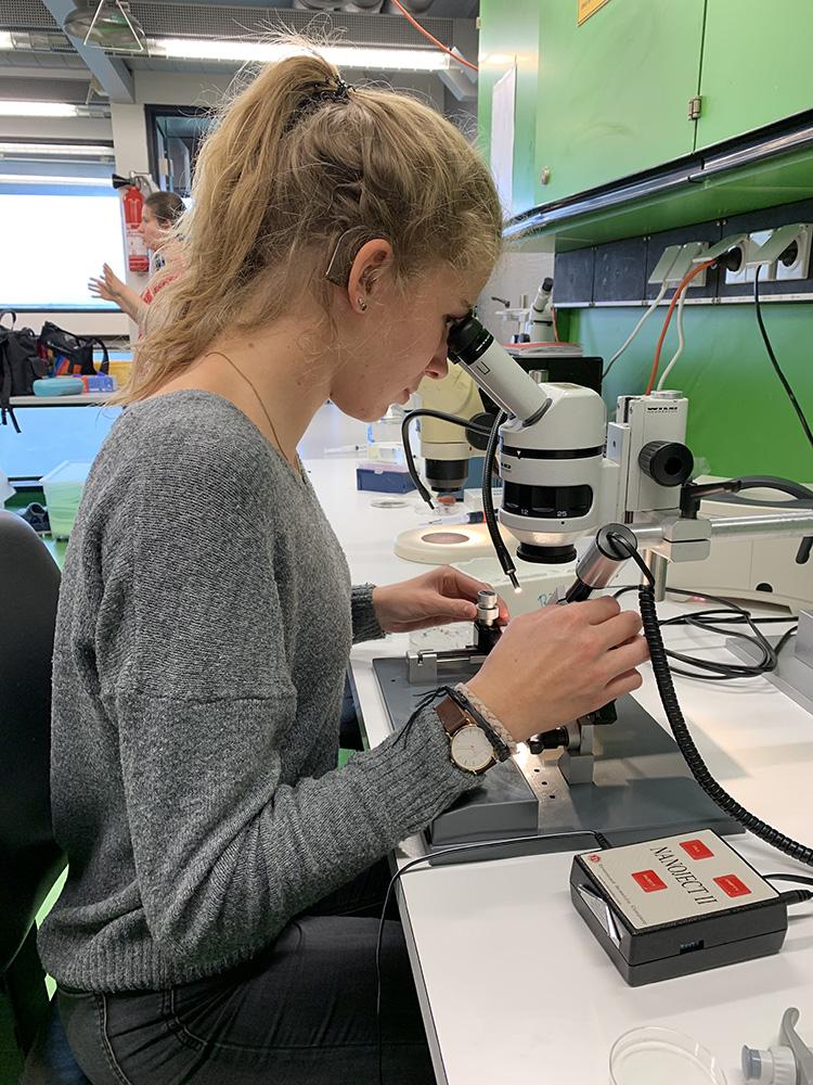 RWB Essen - Ein Tag im Labor des Uniklinikums Aachen - Injektion von RNA in die Froscheizellen