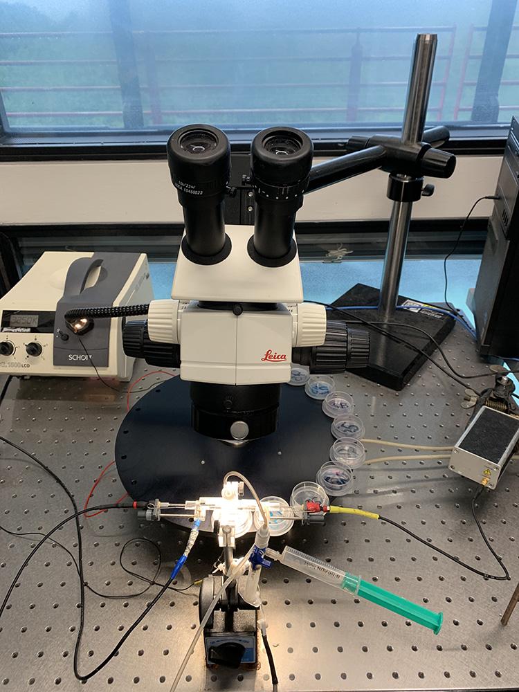 RWB Essen - Ein Tag im Labor des Uniklinikums Aachen - Messstand zur Bestimmung der Ströme des Ionenkanals ASIC